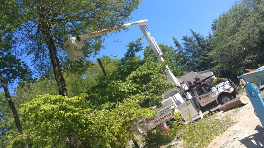 Rudys Tree Service and Landscaping Projects Professional